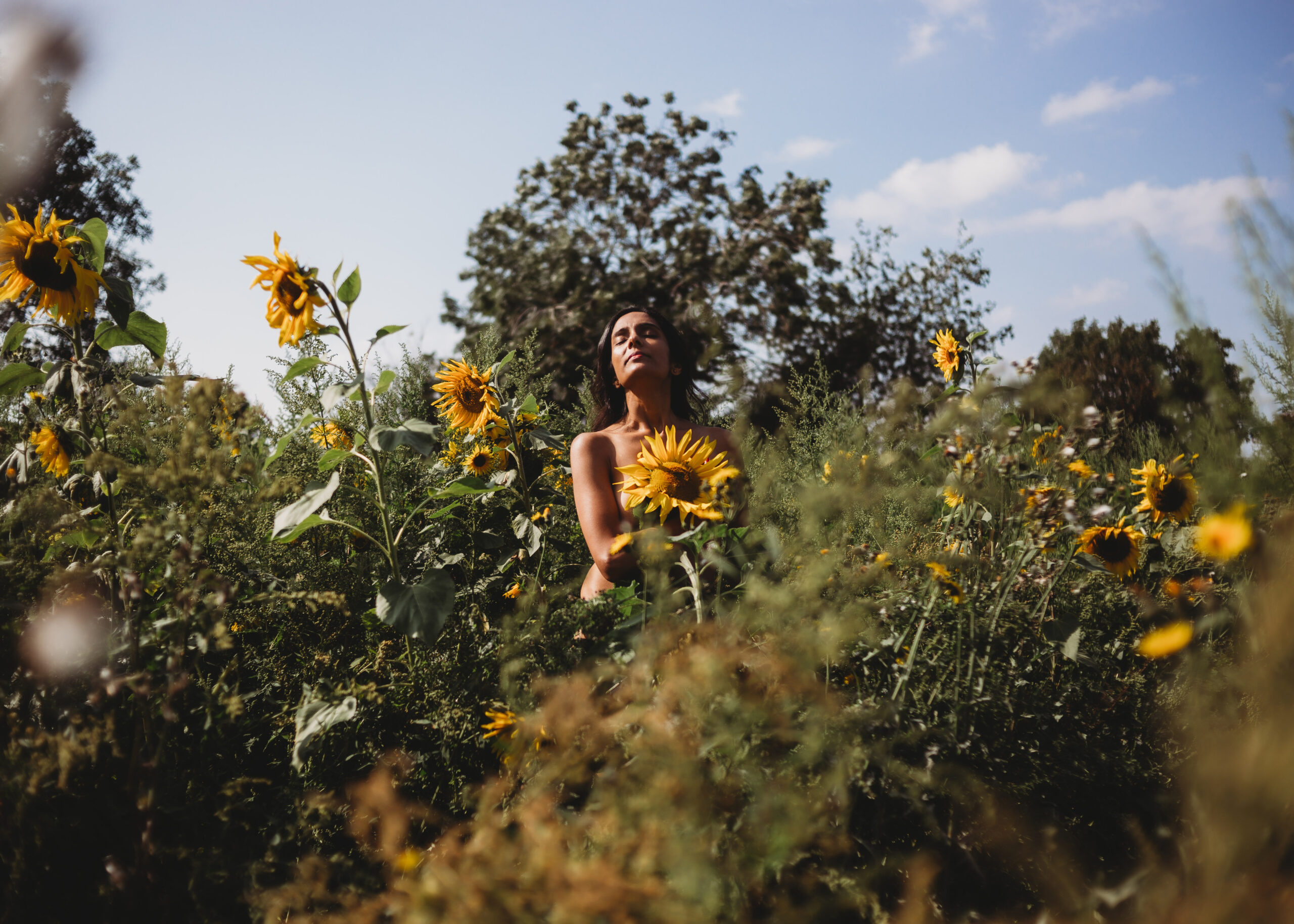 sunflower field boudoir photography Leicester